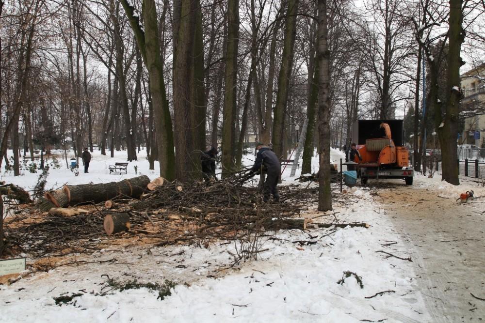 Wycinka chorych drzew w Parku Miejskim