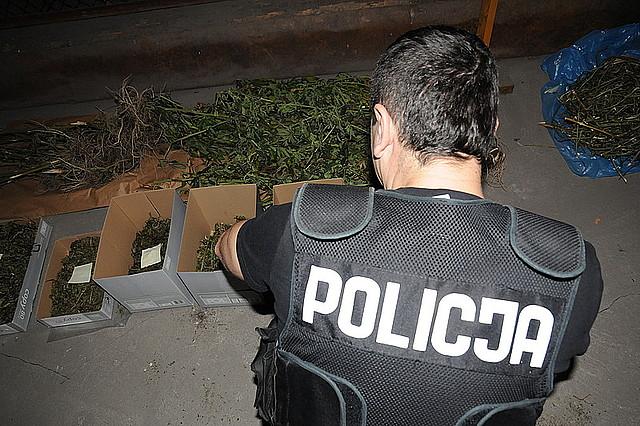 Policjanci zabezpieczyli 3,5 kilograma ziela konopi