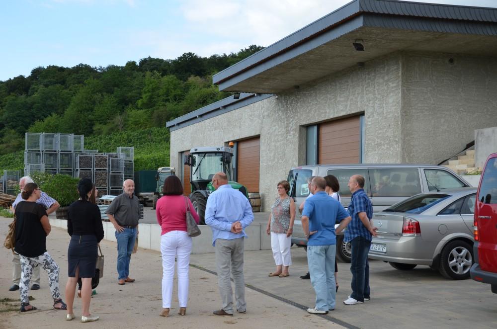 Winnica ekologiczna Ollinger-Gelz w Perl. Fot. © Jasielskie Stowarzyszenie Winiarzy